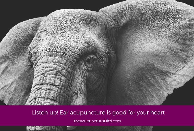 Listen Up Ear Acupuncture Is Good For Your Heart